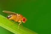 Enabling behavioural epigenetics in drosophila