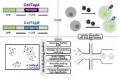 CellTag Indexing