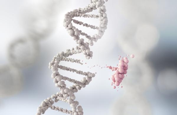 Epigenome editing via exogenous DNA