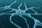 Cell size sensing